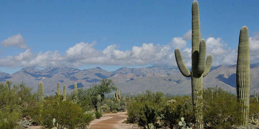 desert trail and cactus